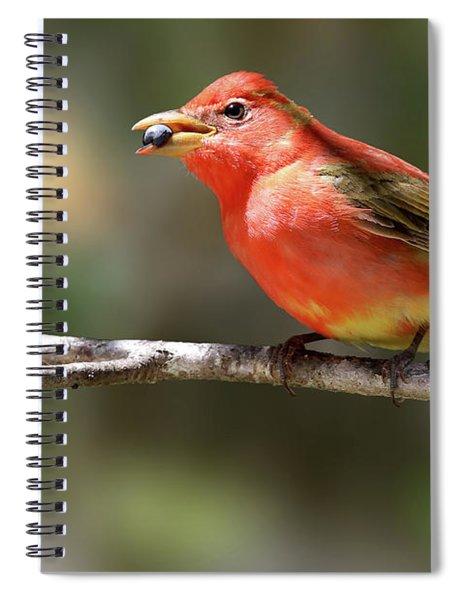 Stuffed Summer Tanager Spiral Notebook