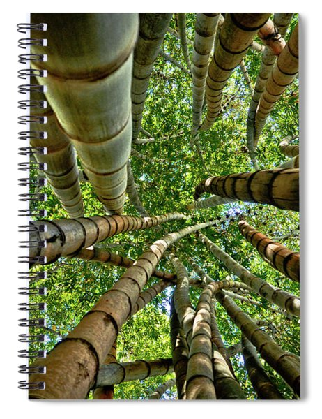 Stunning Bamboo Forest - Color Spiral Notebook