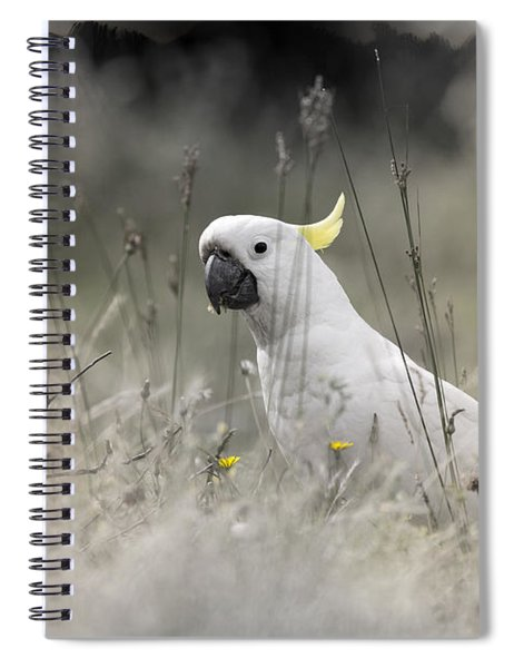 Sulphur Crested Cockatoo Spiral Notebook