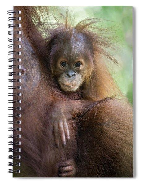 Sumatran Orangutan 9 Month Old Baby Spiral Notebook