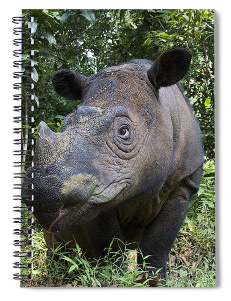 Sumatran Rhinoceros Sumatran Rhino Spiral Notebook
