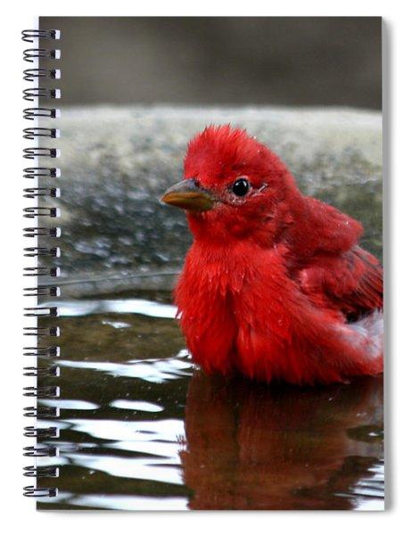 Summer Tanager In Bird Bath Spiral Notebook