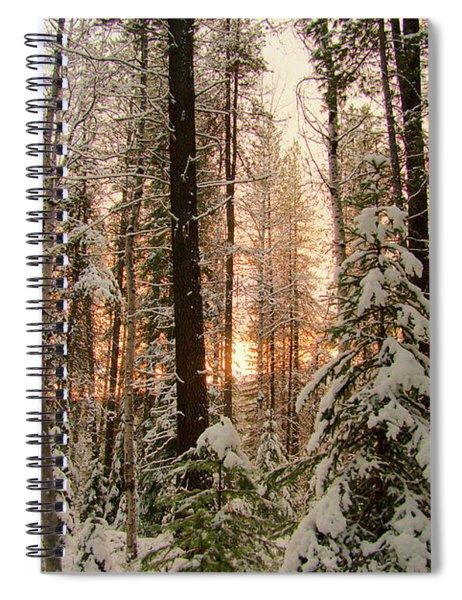 Sun Of Winter Trees Spiral Notebook