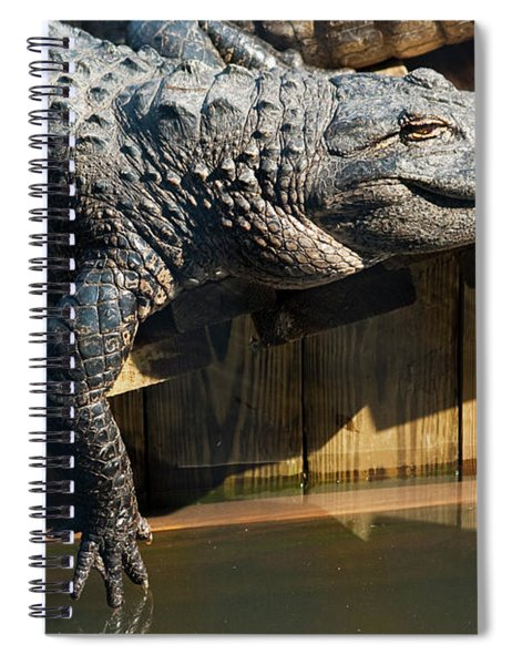 Sunbathing Gator Spiral Notebook