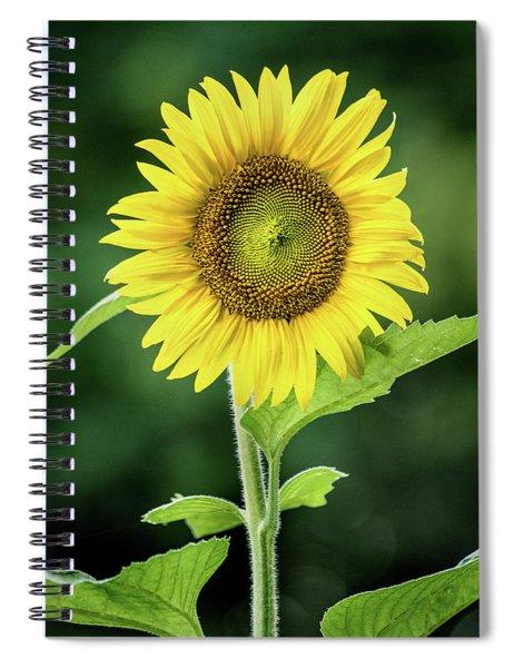 Sunflower In Bloom Spiral Notebook