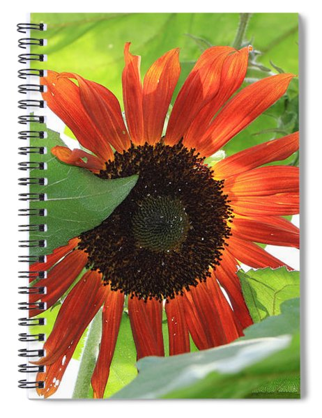 Sunflower In The Afternoon Spiral Notebook