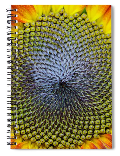 Sunflower Mendala Spiral Notebook