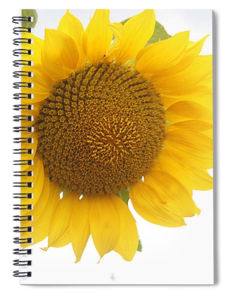 Sunflower Salutation  Spiral Notebook