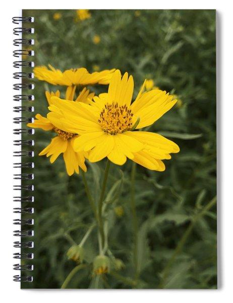 Sunflower Sanctuary  Spiral Notebook