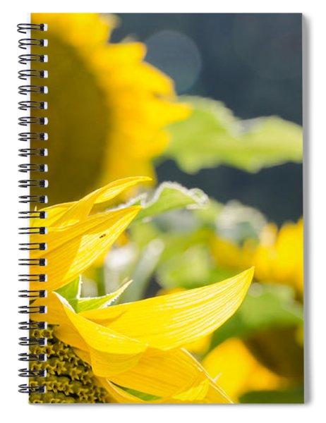 Sunflowers 14 Spiral Notebook