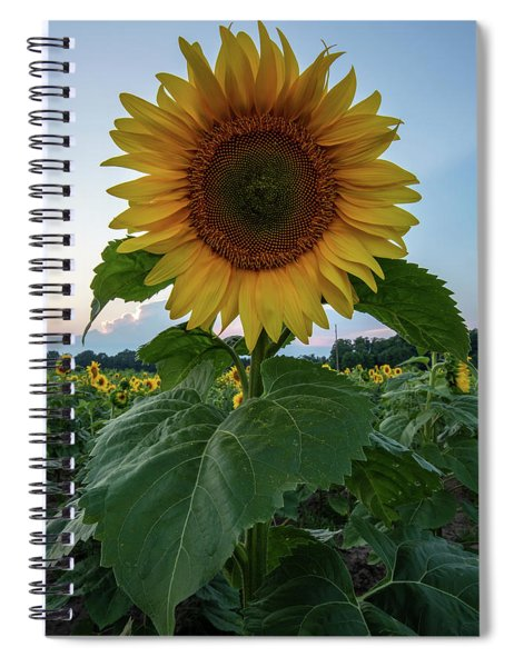 Spiral Notebook featuring the photograph Sunflowers 3 by Heather Kenward