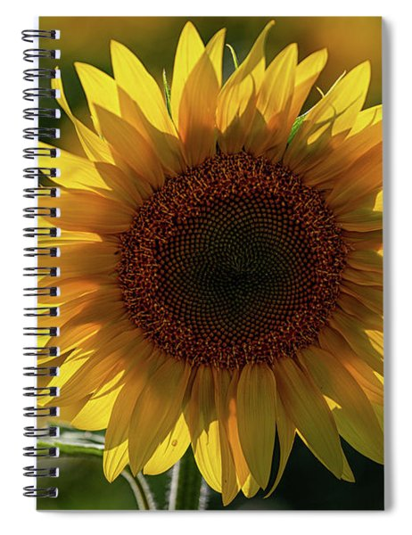 Spiral Notebook featuring the photograph Sunflowers 6 by Heather Kenward