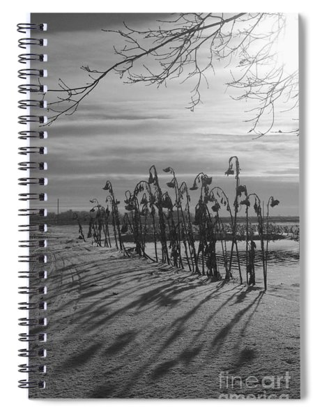 Sunflowers In The Winter Sun Spiral Notebook