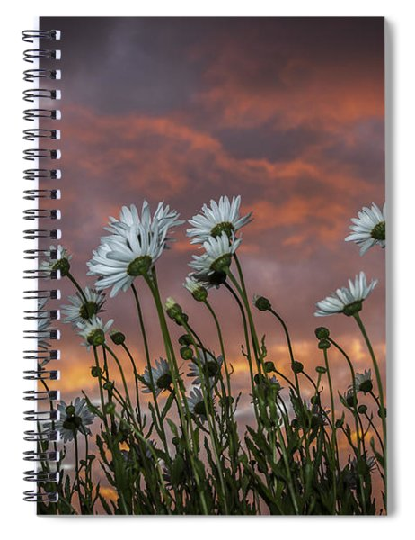Sunset And Daisies Spiral Notebook