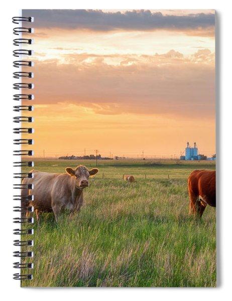 Sunset Cattle Spiral Notebook