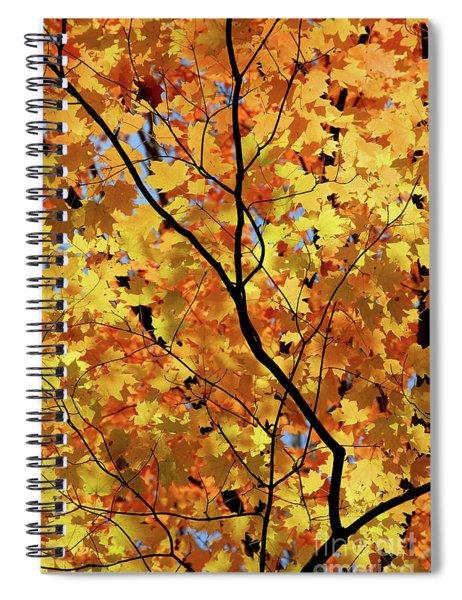 Sunshine In Maple Tree Spiral Notebook