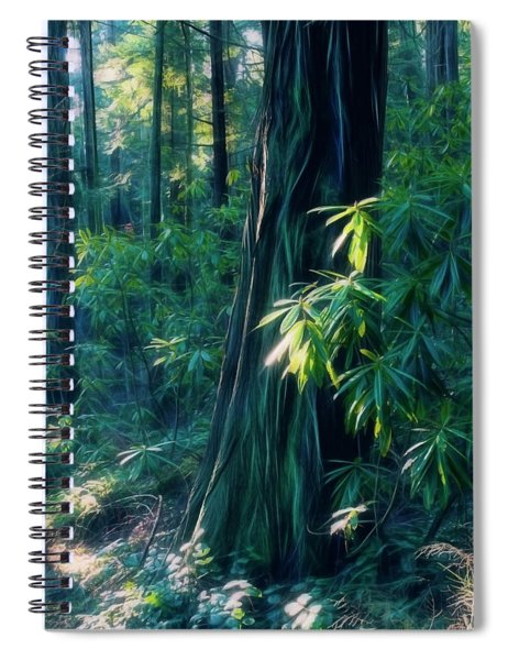 Sunshine In The Forest Spiral Notebook