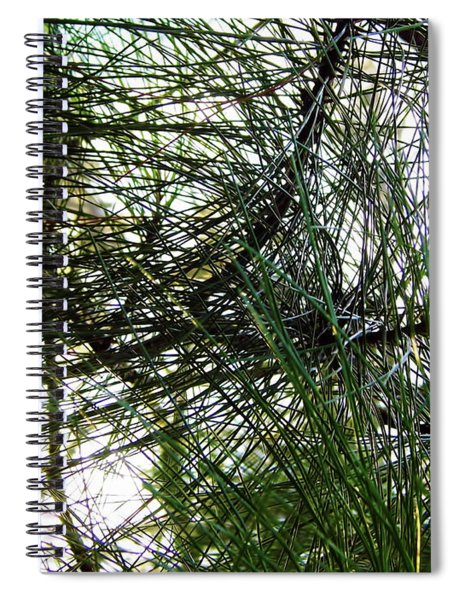 Sunshine Through Pine Needles Spiral Notebook