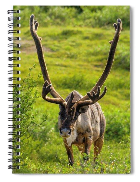 Surprise Spiral Notebook
