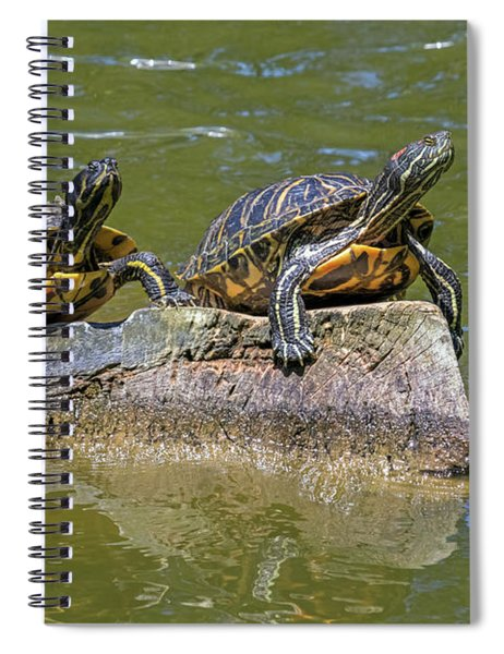 Surveying Their Domain Spiral Notebook