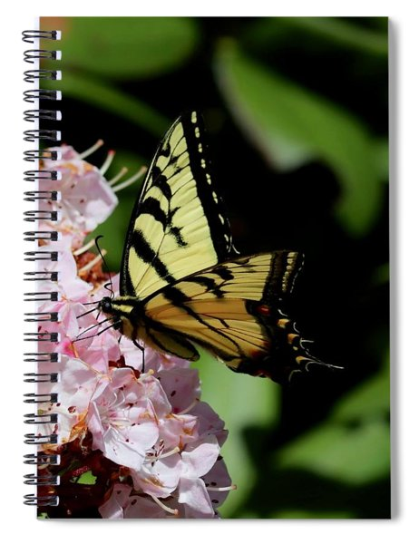 Swallow Tail On Mountain Laurel Spiral Notebook