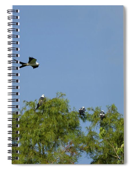 Swallow-tailed Kite Flyover Spiral Notebook