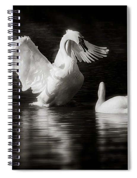 Swan Display Spiral Notebook