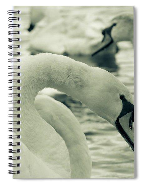 Swan In Water Spiral Notebook