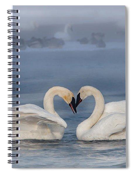 Swan Valentine - Blue Spiral Notebook