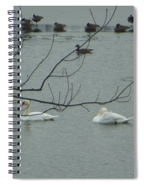 Swans With Geese Spiral Notebook