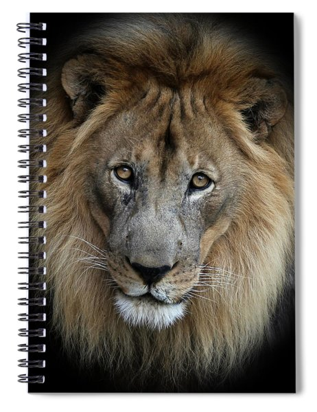 Sweet Male Lion Portrait Spiral Notebook