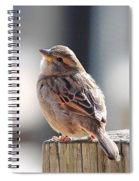 Sweet Sparrow Spiral Notebook
