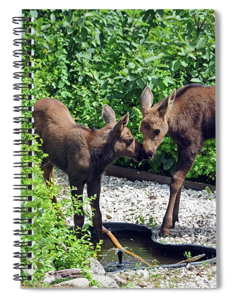Sweet Twin Moose Calves Spiral Notebook