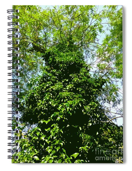 Tall Evergreen Tree Spiral Notebook
