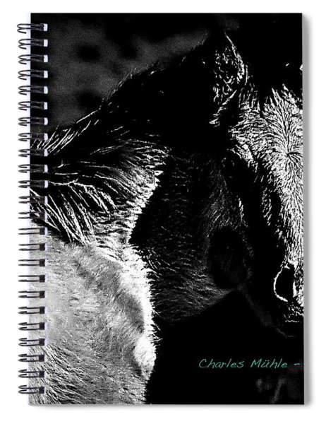 Taos Pony In B-w Spiral Notebook