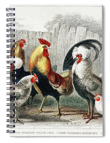 Taps And Hens From A History Of The Earth And Animated Nature Spiral Notebook