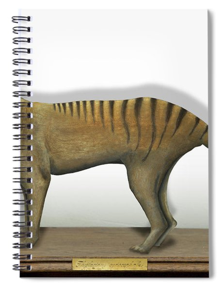 Tasmanian Tiger-thylacinus Cynocephalus-tasmanian Wolf-lobo De Tasmania-tasmanian Loup-beutelwolf    Spiral Notebook