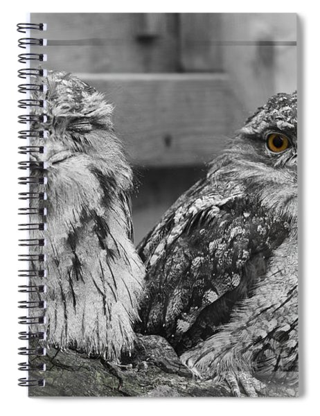 Tawney Frogmouths Spiral Notebook