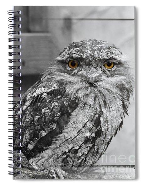 Tawney Frogmouths Spiral Notebook