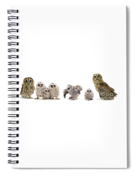Tawny Owl Family Spiral Notebook