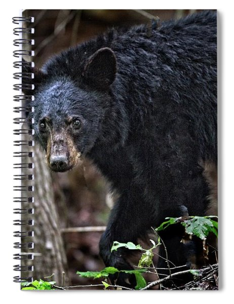 Tennessee Black Bear Spiral Notebook