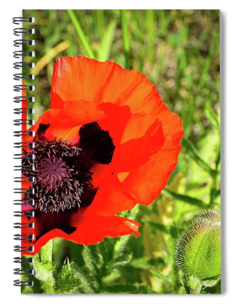 Teton Poppy Spiral Notebook
