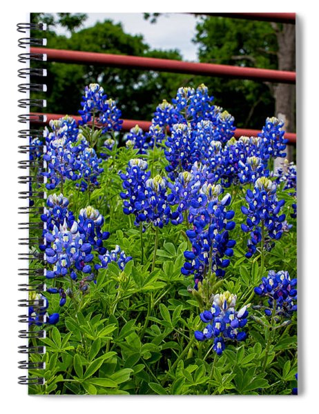 Spiral Notebook featuring the photograph Texas Bluebonnets In Ennis by Robert Bellomy