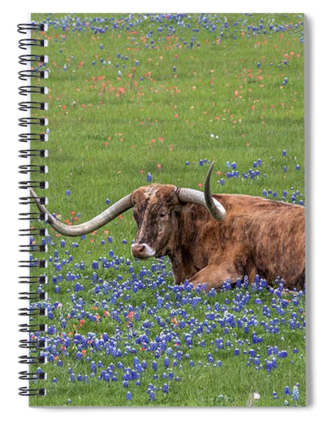 Spiral Notebook featuring the photograph Texas Longhorn And Bluebonnets by Robert Bellomy