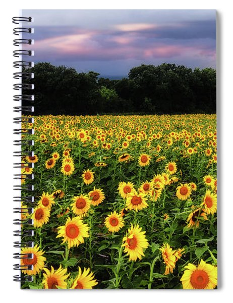 Texas Sunflowers Spiral Notebook by Robert Bellomy