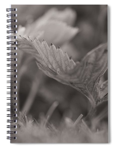 The Allotment Project - Strawberry Plant Spiral Notebook