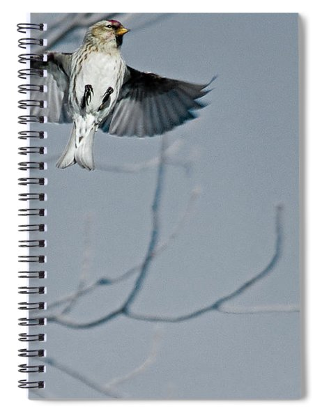 The Arctic Redpoll In-flight Spiral Notebook