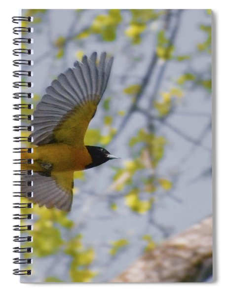 The Baltimore Oriole In-flight Spiral Notebook