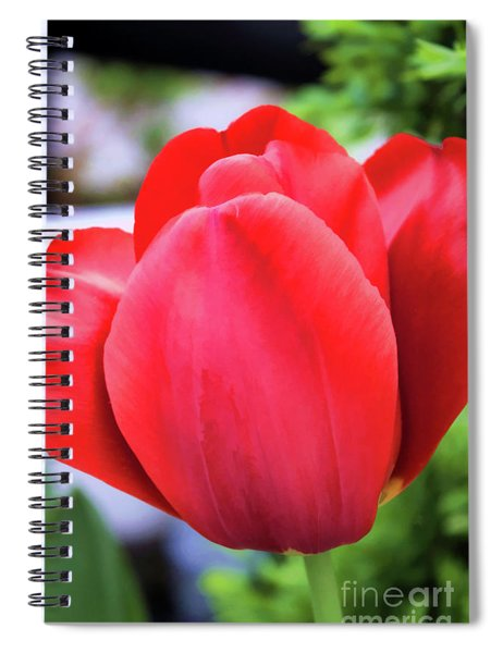 The Tulip Beauty Spiral Notebook
