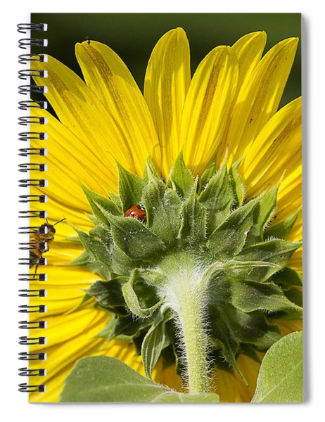 The Bee Lady Bug And Sunflower Spiral Notebook